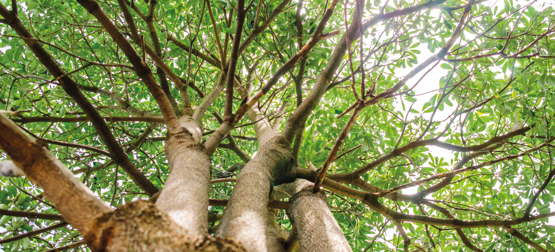 Foto von einem Baum von unten am Stamm hoch fotografiert.